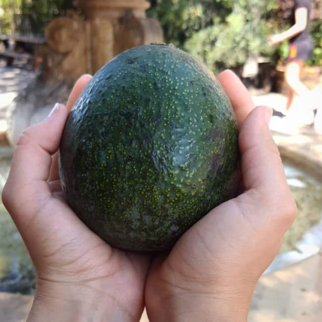 hands cradeling an avocado symbolizes the wealth in the eight forms of capital