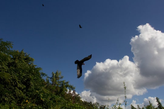 Hawk flying over a natural setting suggests zooming out for a birds eye view of systems where banks are a component.